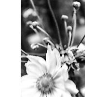 — Windy flower — Photographic Print