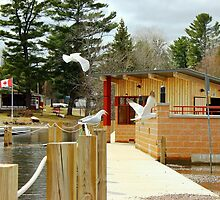 Gulls to the boardwalk, dedicated to changing seasons by Kelly  McAleer