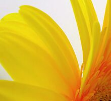 Cheerful by JuliaWright