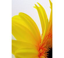 Cheerful Photographic Print