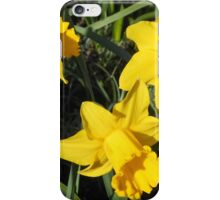 Daffodils Dreaming iPhone Case/Skin