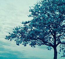Tree in Cool by MissCellaneous