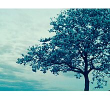 Tree in Cool Photographic Print