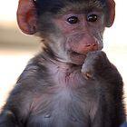 Troy- Baby Baboon by Kimberley Mazzoni