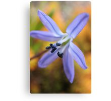 Macro - Blue / Purple Flower Canvas Print