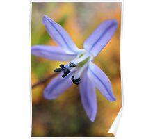 Macro - Blue / Purple Flower Poster