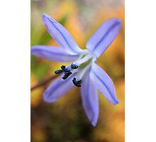 Macro - Blue / Purple Flower Photographic Print