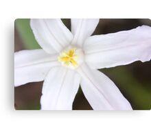 Macro - White Flower Canvas Print