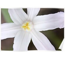 Macro - White Flower Poster