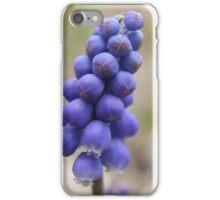 Macro - Grape Hyacinth iPhone Case/Skin