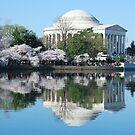 DC Cherry Blossom 2015 by bkphoto