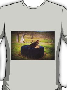Watching for squirrels  T-Shirt