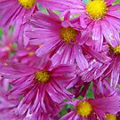 Wet and Pink by Tracy Faught
