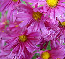 Wet and Pink by Tracy Wazny
