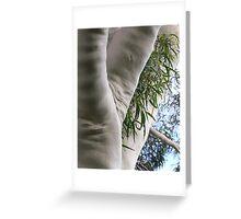 lemon scented eucalypt tree Greeting Card