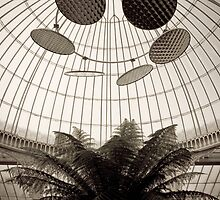 Sepia Fern in Antique Glasshouse by redkite