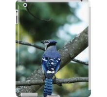 Singing The Blues - Blue Jay iPad Case/Skin