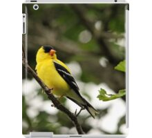 Brilliant Observer Goldfinch iPad Case/Skin