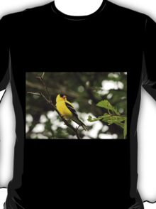 Brilliant Observer Goldfinch T-Shirt