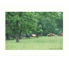 Horses in Oaks Art Print