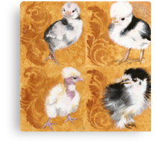 Baby chickens!   Canvas Print