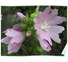 Wonderful Wildflower Poster