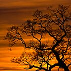 Burning Tree by CJTill
