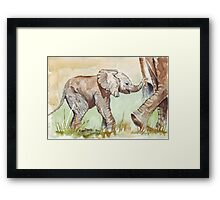 Baby Elephant walk Framed Print