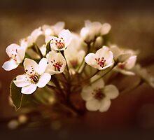Blossom Beauty by Jessica Jenney