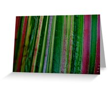 Coloured Maize Greeting Card