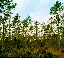 Pine Rockland Ecosystem by Bill Wetmore