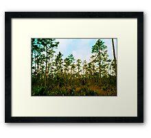 Pine Rockland Ecosystem Framed Print