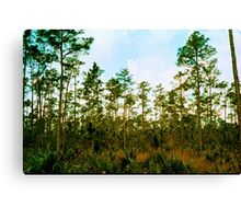 Pine Rockland Ecosystem Canvas Print