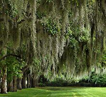 Spanish Moss by Marylee Pope