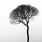 26.4.2015: Tree in the Fog by Petri Volanen