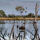 The Wetlands at Nagambie ( 1 ) Looking Across the Goulburn by Larry Lingard-Davis