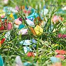 Confetti Garden by Darren Freak