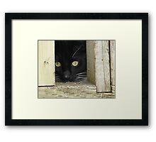 Peek a Boo, I See You Framed Print