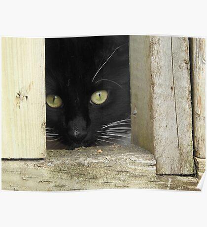 Peek a Boo, I See You Poster