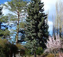 Spring Gardens by Gregory Ewanowich