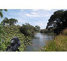 1219-Jungle Comfort Photographic Print