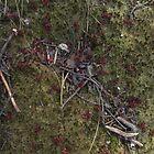Fallen Reds by RVogler