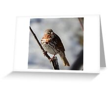 Fox Sparrow Greeting Card