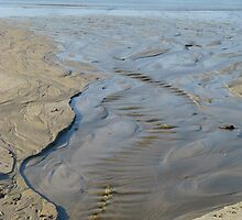 the spine of the beach by delfinada