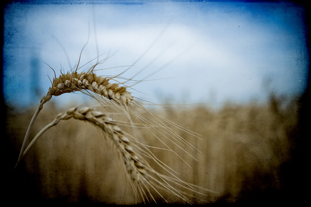 harvest time again II by Victor Bezrukov