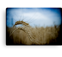 harvest time again II Canvas Print