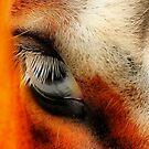 Beauty is in the eye....... by Lover1969