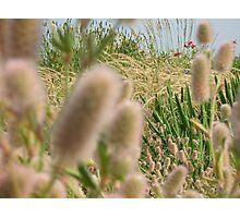 Wildflower Field Photographic Print