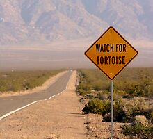 Watch For Tortoise by Chris Clarke