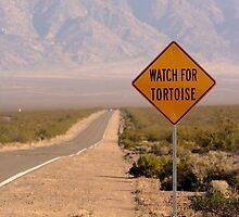 Watch For Tortoise by Chris Clarke